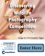 Discovering Wildlife Photography Competition